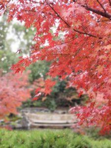 神嶽山神苑の紅葉